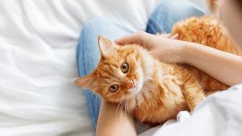 """ทาสแมวต้องระวัง! """"เชื้อราแมว"""" โรคผิวหนังจากสัตว์เลี้ยง ติดต่อสู่คนได้"""