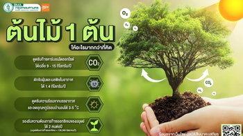 ต้นไม้ 1 ต้น ให้อะไรมากกว่าที่คิด