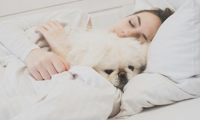 """ไม่อยากป่วย ต้อง """"ใจแข็ง"""" อย่าให้สัตว์เลี้ยง """"นอนร่วมเตียง"""""""