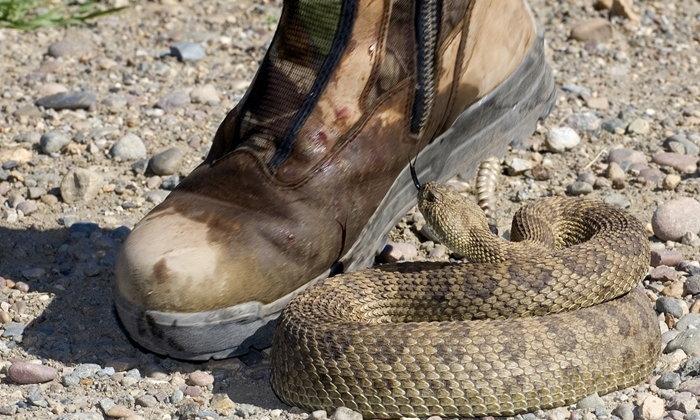 เข้าใจใหม่! งู ตะขาบ แมงป่องกัด ปฐมพยาบาลอย่างไร