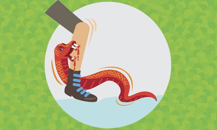 เตือนภัยหน้าฝน! งูพิษ 7 ชนิดคนไทยโดนกัดบ่อย-อันตรายถึงชีวิต