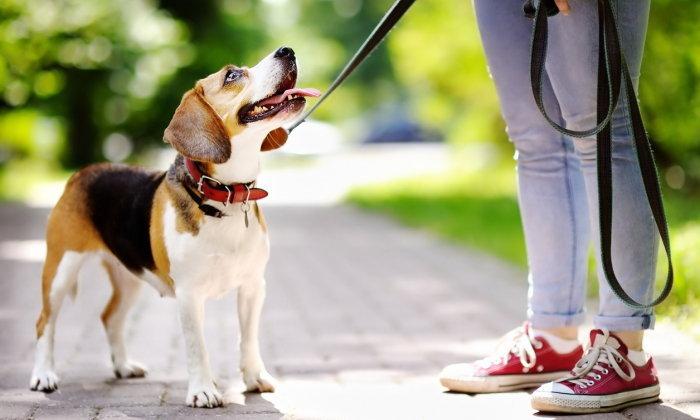 เตือน! เจ้าของหมา-แมว ระวังถูกกัด แม้เป็นสัตว์เลี้ยงของตัวเอง