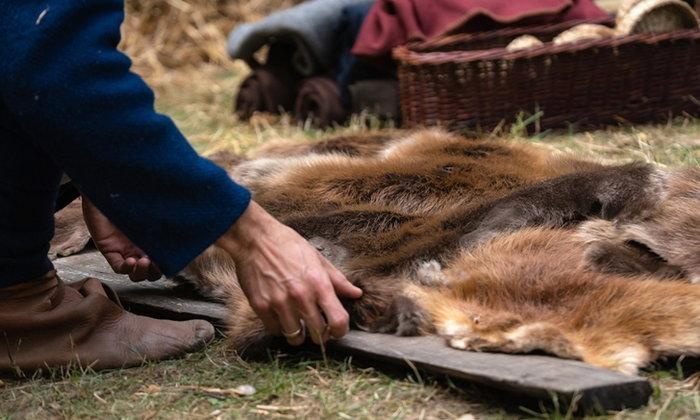 กลุ่มอนุรักษ์เตือน! อาจมีโรคใหม่จากสัตว์ป่าปีละ 5 ครั้งหากไม่ควบคุมจริงจัง