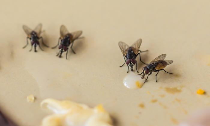 """แพทย์เตือน """"แมลง"""" พาหะนำโรคในช่วงหน้าฝน"""