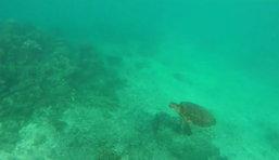 กล้อง GoPro เห็นอะไร เมื่อบังเอิญ ตกลงไปในทะเล
