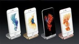 ปลากัดไทยดังทั่วโลก! Apple ชูเป็นวอลเปเปอร์ใหม่ iPhone 6s