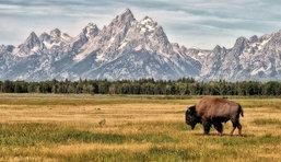 Airbnb เปิดให้บริการเว็บไซต์ค้นหาที่พักใกล้กับอุทยานแห่งชาติของสหรัฐ