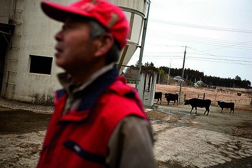 Yukio Yamamoto (wearing red jacket), returns to his car after releasing his Wagyu cows onto irradiated and contaminated land, during one of his visits back to his farm that he evacuated from, near Namie town, inside the 20kilometre nuclear exclusion zone,