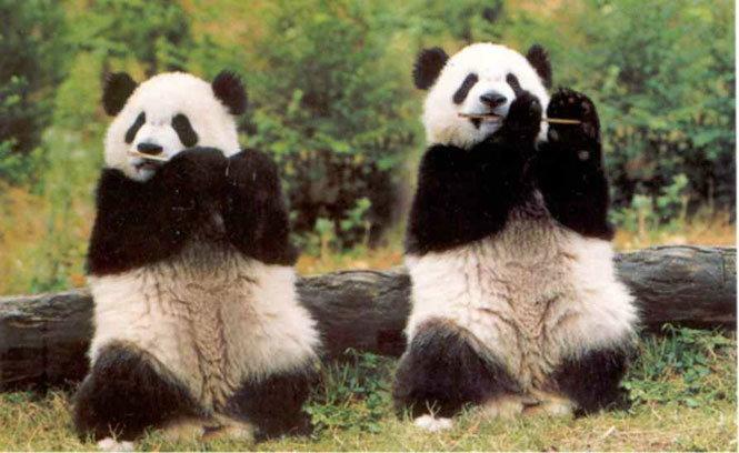 ต้อนรับข่าวน้องหลินปิง!! YouTube ส่งของเล่นใหม่ Cosmic Panda สำหรับคนรักแพนด้า เป็นยังไง