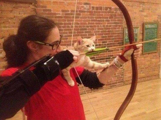 รวมรูปแมวฮาๆ ในโลกอินเตอร์เน็ต ที่คุณต้องยิ้มไม่หยุด