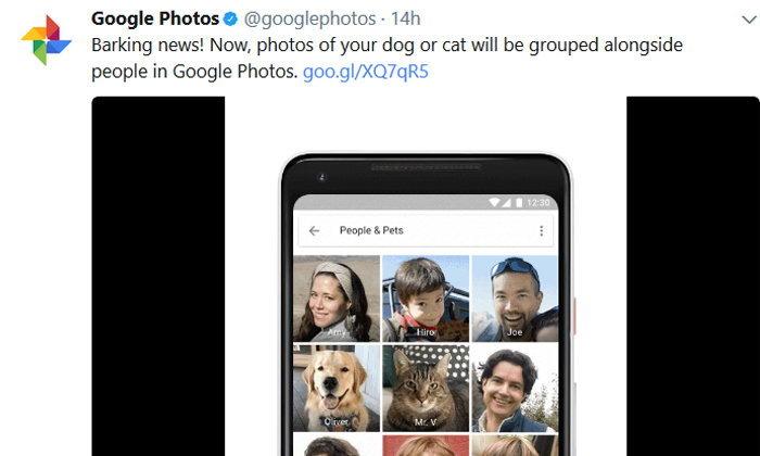 Google Photos เพิ่มฟีเจอร์ใหม่ ใส่ชื่อให้รูปสัตว์เลี้ยงแสนรักของคุณได้ทันที