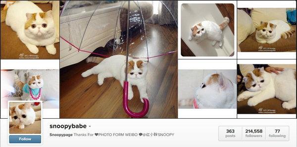 """ตามดู """"Snoopybabe"""" แมวแอ๊บแบ๊ว มาแรงไม่แพ้ซุปตาร์"""