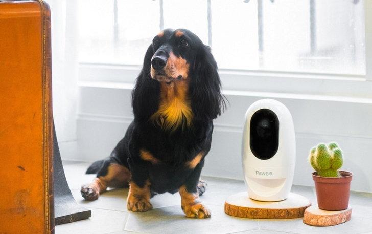 Acer เปิดตัว Pawbo+ , Pawbo Catch กล้องอัจฉริยะและสมาร์ททอย แก็ดเจ็ตใหม่สำหรับคนรักสัตว์