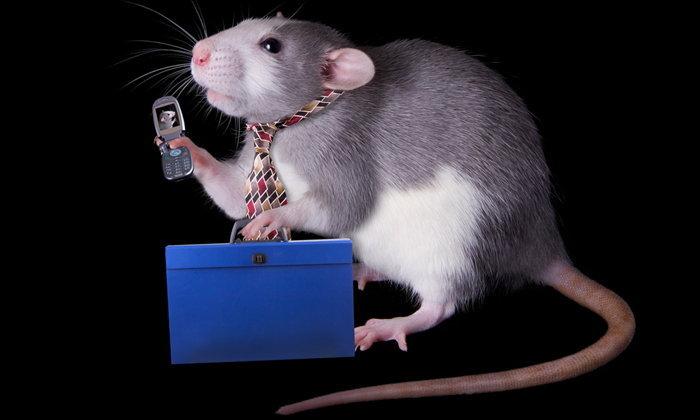 """นักวิทยาศาสตร์ไขกระจ่าง! """"รังสีจากโทรศัพท์"""" อันตรายเหมือนที่เราคิดหรือไม่!"""
