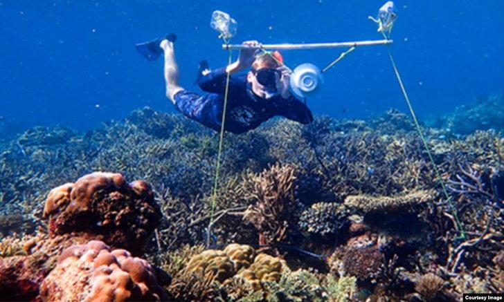 นักวิจัยใช้เสียงเรียกฝูงปลาให้กลับคืนสู่ปะการังเสื่อมโทรม