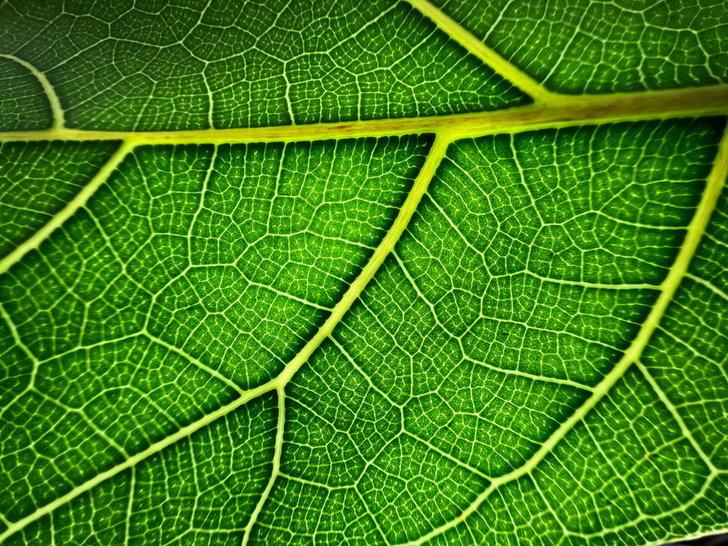 apple_iphone-13-pro_leaf_0914