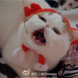 Snoopybabe
