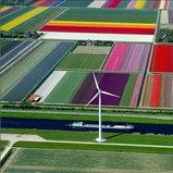 ดอกทิวลิปในทุ่ง Spoorbuurt, นอร์ทฮอลแลนด์, เนเธอร์แลนด์