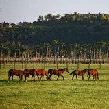 ฟาร์มม้าของ บิลล์ เกตส์