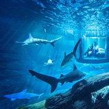 นอนกับฉลาม