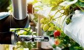 """""""ปัญญาประดิษฐ์"""" ช่วยเพิ่มผลผลิตอาหารแก้ไขความอดอยากทั่วโลก"""