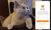 รู้จัก MeowTalk โปรแกรมแปลภาษาแมว เพื่อทาสแมวเข้าใจ เจ้านายของคุณให้มากขึ้น