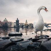 ตัวอย่างภาพจากกล้อง Nokia 9 PureView