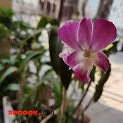 ภาพจาก Huawei P40 Pro
