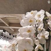 ตัวอย่างภาพถ่ายจาก Realme C1