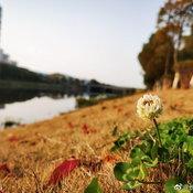ตัวอย่างภาพจาก Huawei P40 Pro Premium