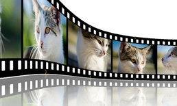 แนะนำโปรแกรมตัดต่อวิดีโอแบบฟรีๆ ทุกระดับ เลือกใช้ได้ตามชอบเลย