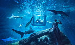 "Airbnb โชว์ห้องพักแหวกแนวเบอร์ล่าสุด ""นอนกับฉลาม"""