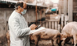 ทีมนักวิจัยอเมริกันคิดค้นวิดีโอเกมช่วยเกษตรกรป้องกันโรคระบาดหมู