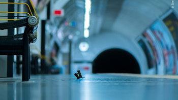 """ภาพ """"เจ้าหนูสู้กันในรถไฟใต้ดิน"""" ได้รับรางวัลภาพสัตว์ป่าแห่งปี"""
