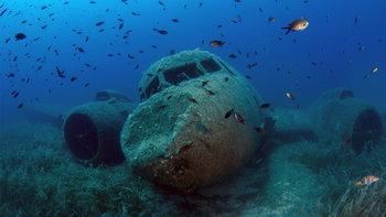 """""""หุ่นยนต์ใต้น้ำ"""" เตรียมปลูกลูกปะการังตามแนวประการังยักษ์ของออสเตรเลีย"""