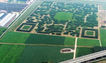 เล็กๆไม่ จีนสร้าง คิวอาร์โค้ด ขนาดยักษ์จากต้นไม้ มองได้จากท้องฟ้า