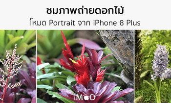 รีวิว iPhone 8 Plus ถ่ายรูปดอกไม้สีสด ด้วยโหมด Portrait