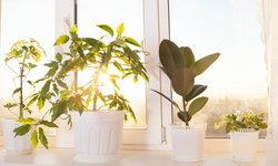 ลดอุณหภูมิของบ้านให้เย็นลง.. ด้วยวิธีจากธรรมชาติแสนง่าย