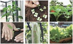 12 เดือน ชวนปลูกผักตามฤดู