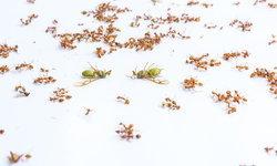 ดูแลบ้านยังไงให้หมดปัญหาเรื่องแมลง