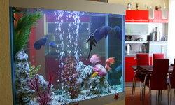 คิดแต่งบ้านด้วยตู้ปลา จัดตู้ปลาอย่างไรให้ถูกหลักฮวงจุ้ย