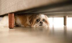 10 จุดสกปรกของบ้านมีสัตว์เลี้ยง ที่คุณต้องรีบเช็ก