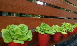 ปลูกผัก จัดสวนง่ายๆ แบบคนขี้เกียจ