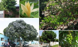 5 ต้นไม้ปลูกหน้าบ้านให้ร่มเงา ดีต่อใจใครๆ ก็ชอบ