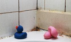 5 วิธีป้องกันเชื้อราในห้องน้ำ กำจัดง่ายๆ ทำซะ