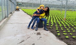 ผักสวนครัวไทยในเมืองนอก มะกรูด มะนาว ในเบลเยียม