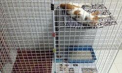 แชร์ไอเดีย 'DIY กรงแมว' สร้างพื้นที่พักผ่อนและปลอดภัยให้กับเจ้าขนปุย