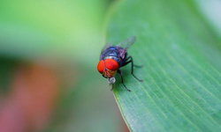 วิธีไล่แมลงวันในบ้านด้วยวิธีธรรมชาติ ช้าหน่อย แต่ปลอดภัย
