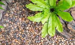 10 วิธีที่สร้างสรรค์ในการใช้ก้อนกรวด สำหรับจัดแต่งสวน