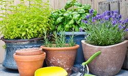 7 พืชสมุนไพร ขับไล่แมลงได้ทุกชนิด